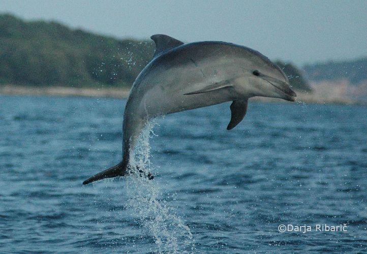 """Razstava fotografij """"Delfini v Jadranskem morju"""""""